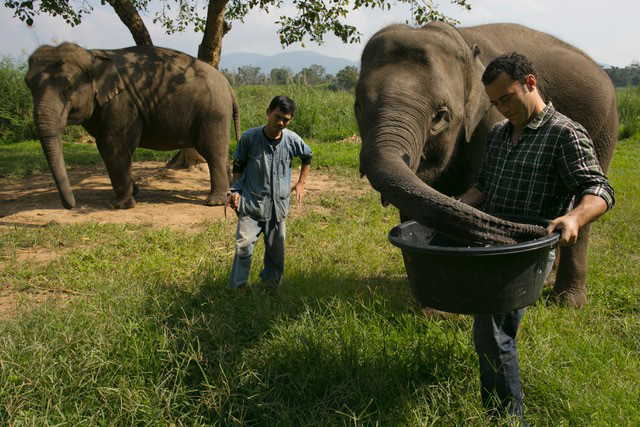 A man lifting a bucket to an elephant's trunk while another man watches.