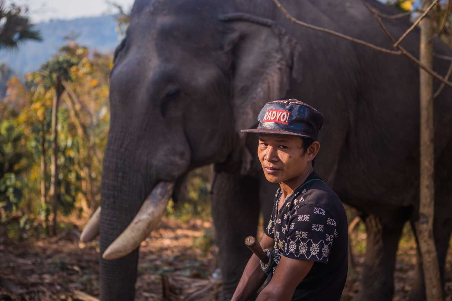 A man standing in front of an elephant