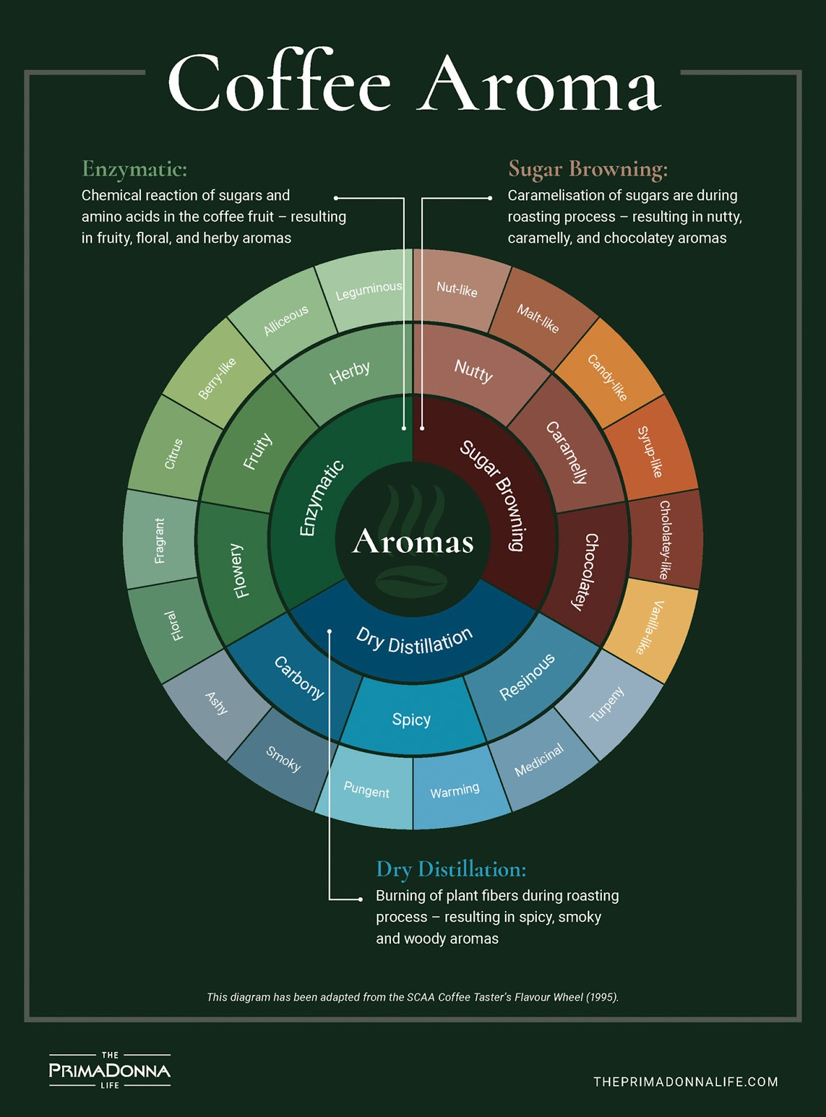 An abridged version of the coffee tasting wheel, where we break down the scent notes a coffee can have, and how they are classified by professional baristas