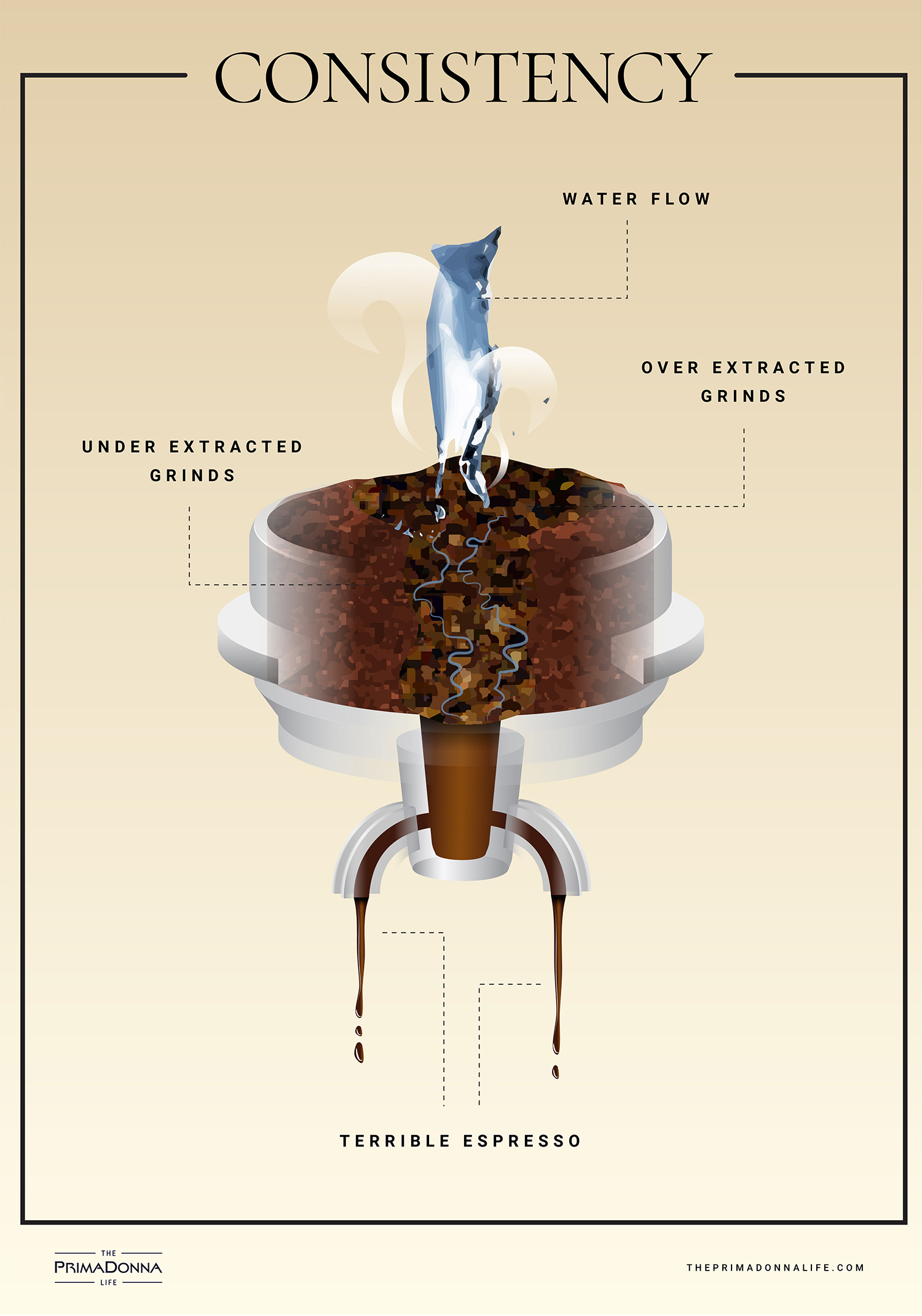 An infographic showing how water flows through ground coffee