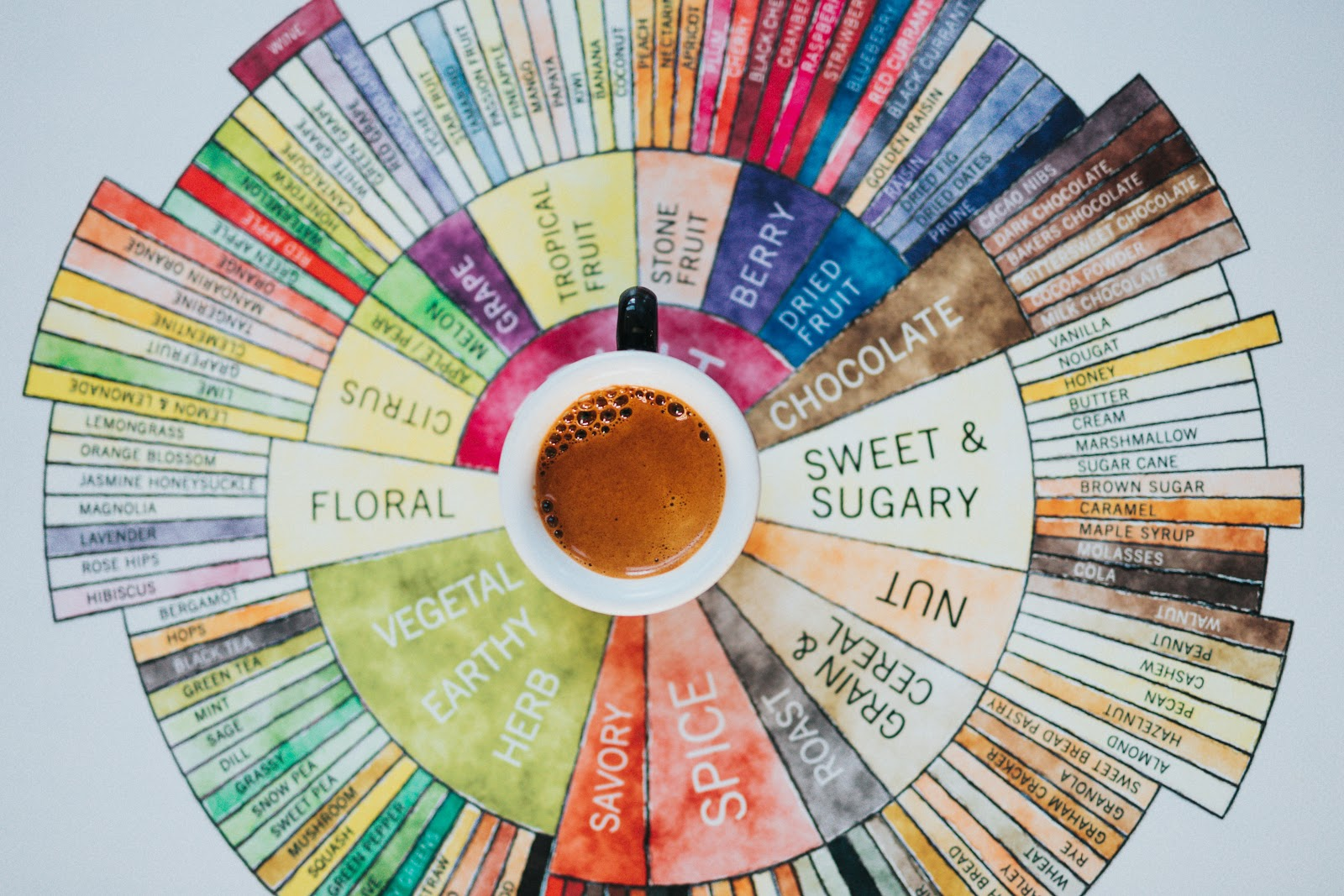 a cup of coffee placed in the middle of a coffee tasting wheel