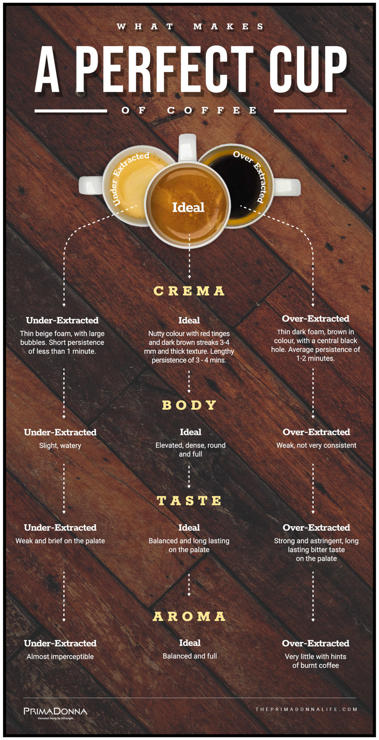 An infographic on what makes a perfect cup of coffee