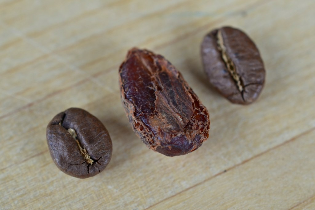 A Liberica coffee bean (middle) flanked by Arabica beans