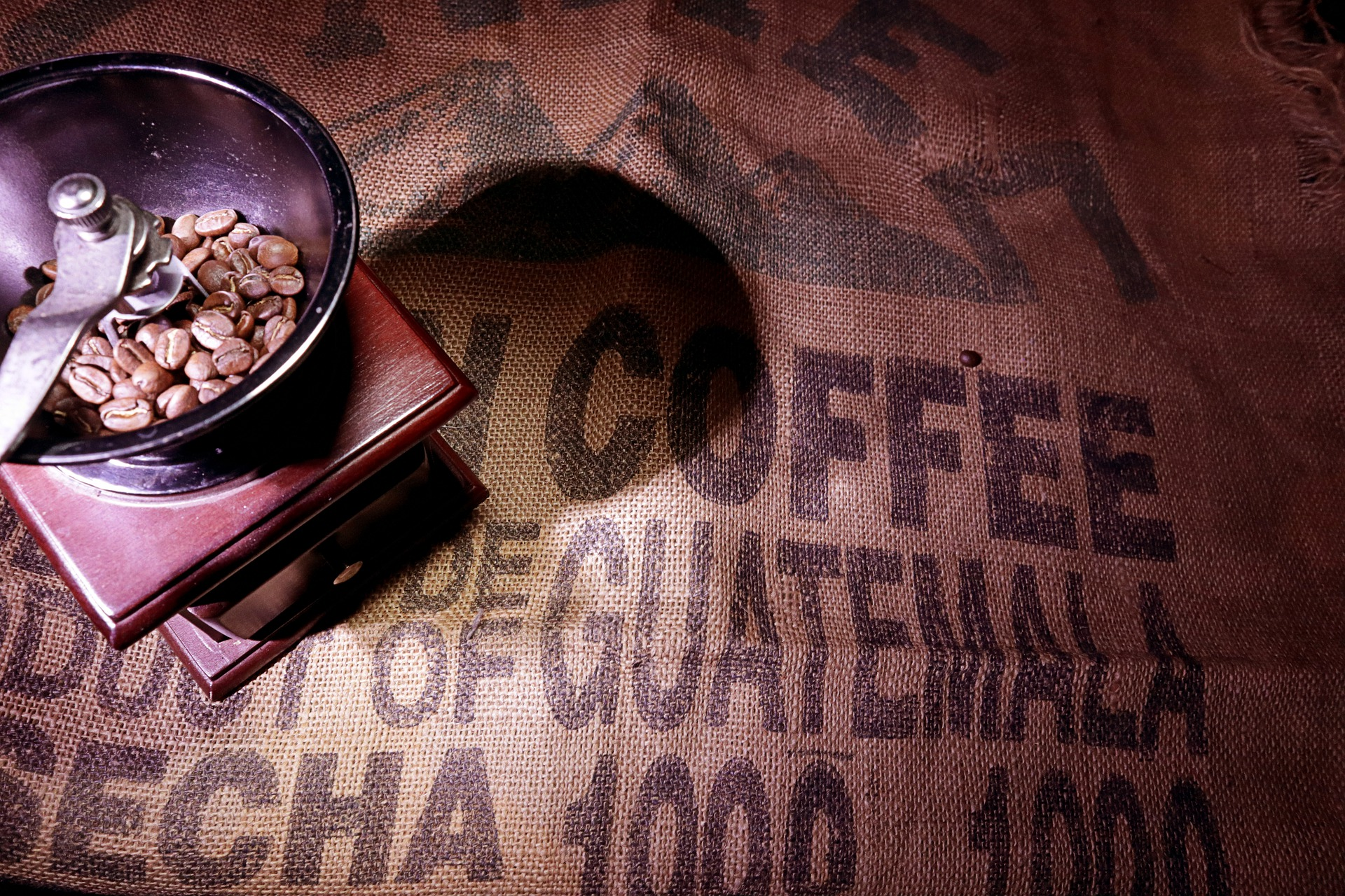 Guatemala coffee beans in a coffee grinder