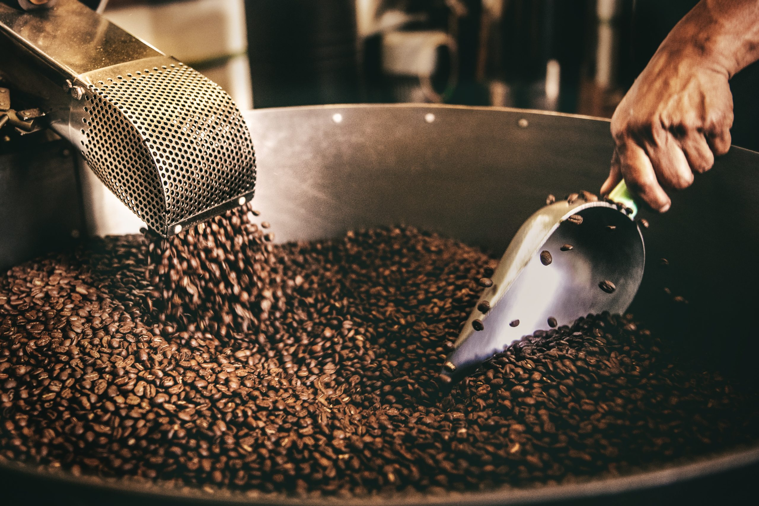 a coffee roaster scooping roasted coffee beans from the roasting machine